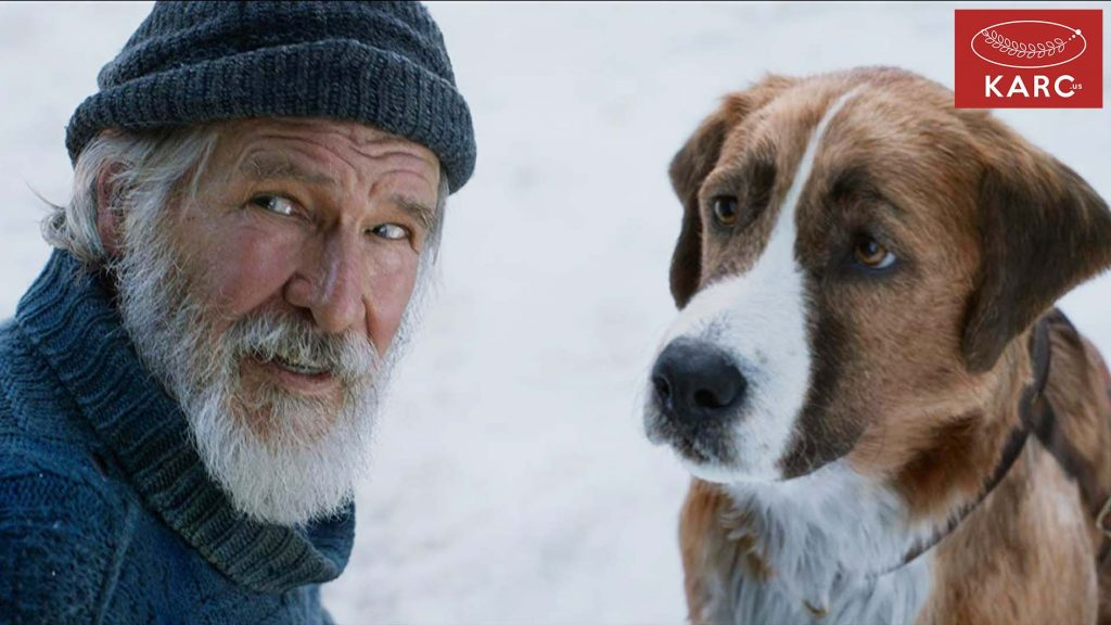 บั๊ก คือ สุนัขสายพันธ์ผสมระหว่าง St. Bernard - Scottish ผู้กล้าหาญ - Karc.us